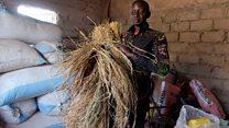 Sénégal: des ex-migrants devenus agriculteurs