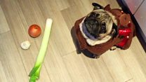 What not to feed your dog at Christmas