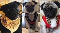 Making high-end fashion for dogs
