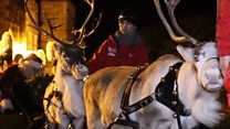 Rent-a-reindeers' time to shine on parade