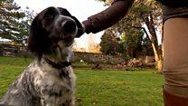 Как новый способ лечения спас собаке сломанную лапу