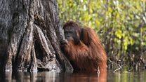 'Poignant' orangutan photo wins top prize