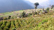 सिङ्गो गाउँ तरकारी खेतीबाट आत्मनिर्भर
