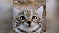Милий котик чи безжалісний вбивця?