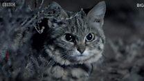 القطة الأخطر في العالم