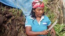 """""""Sin carretera, ¿cómo nos movemos?"""", las dificultades de los agricultores de Boca de Cupe, en plena región del Darién en Panamá"""