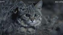ही आहे जगातली सर्वांत खतरनाक मांजर