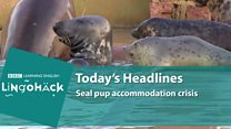 Lingohack - урок англійської про тюленів