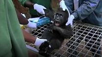Gorilla Enclosure Appeal
