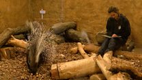 The zookeeper who reads to porcupines