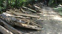 شکایت شرکت تولیدی چوب از خبرنگار محیط زیستی در ایران
