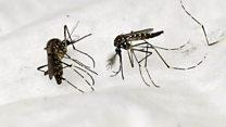 世界を揺るがす――マラリアとの戦いに安価な携帯装置で挑む