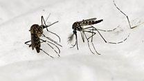 Un dispositivo móvil para combatir la malaria