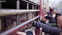 動物愛護は過激主義なのか 英で活動家と農家が対立