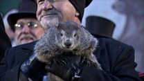 Punxsutawney Phil's Groundhog prediction
