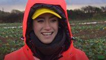 Brits try EU migrants' veg picking job