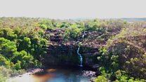 Como destruição do Cerrado ameaça 'floresta de cabeça para baixo' e abastecimento de aquíferos