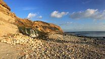 Dippy tour kicks off in Dorset