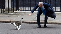 موقف طريف بين القط لاري البريطاني ومدير ميتسوبيشي الياباني