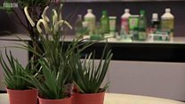 L'Aloe vera est-il vraiment bon pour vous?