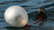 Bag charge 'flipped switch' on plastic waste at sea