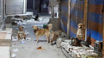 What's the problem with India's feral dogs?