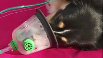 Devon and Somerset Fire and Rescue introduces pet oxygen masks on all of their engines