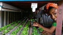 Nigeria's soil-free salad farm