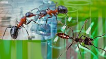 The ants putting a bite into cancer