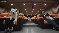 'โรงหนังสำหรับหมา' ธุรกิจเอาใจสุนัขต้อนรับปีจอในจีน