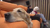 چین: کتوں کی آؤ بھگت