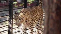 Il partage sa maison avec des léopards et des ours