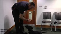 Puppy recruited to save lives