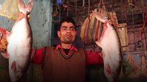 नगालैंड की सियासत में कौन है बड़ी मछली?