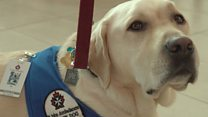 Therapy dogs roam Canadian airport to ease travel stress