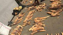An kama buhun hauren giwa da Pangolin a Lagos