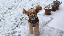 Tips to care for your pet in the snow