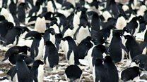Гигантская колония пингвинов нашлась в Антарктике
