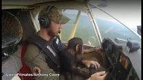 赤ちゃんチンパンジー、助けてくれたパイロットにすっかりなつき