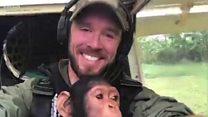 شمبانزي يصاحب الطيار الذي أنقذه في أفريقيا