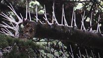 Spiky deterrents for unwelcome birds