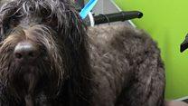 'Top notch five-star doggie hotel'