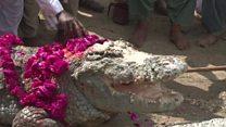 Фестиваль крокодила в Пакистане