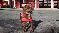 Meet the fire service's furriest new member