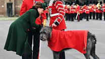 Duchess meets wolfhound on St Patrick's Day