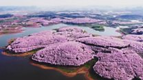 Hoa nở ở Tây Nam TQ nhìn từ drone