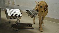 Dogs trained to sniff out ancient treasure