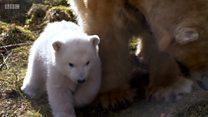 Meet the UK's new polar bear cub