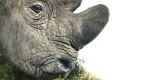 苏丹走了 北方白犀牛绝种了