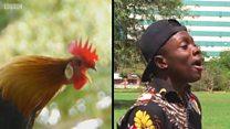 非洲男孩模仿超50种动物 梦想创吉尼斯纪录